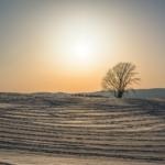 冬の哲学の木