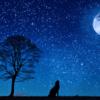ミスリードの霧の中を進むような読書『十二国記 白銀の墟 玄の月』【書評】